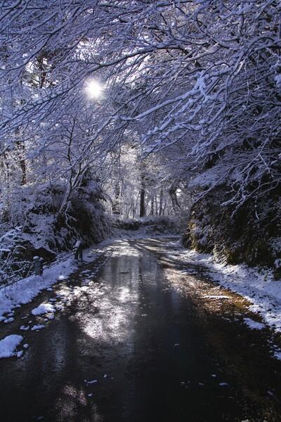 冬の木洩れ日 林道
