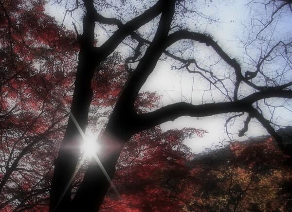 【秋】 晩秋