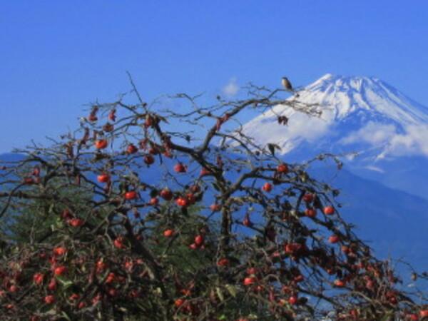 百舌鳥と富士