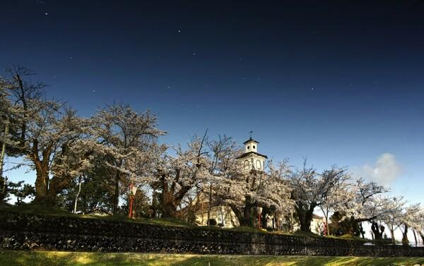 御堀に映る桜並木