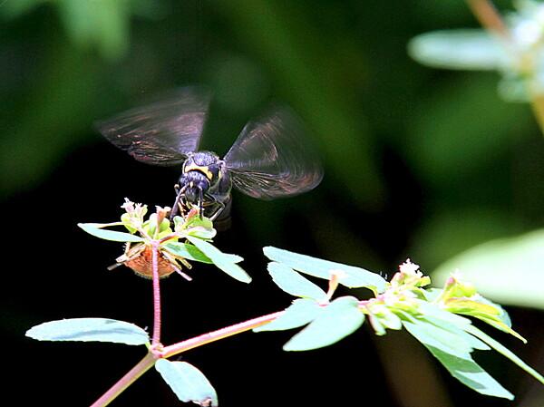 小さい蜂と小さい花