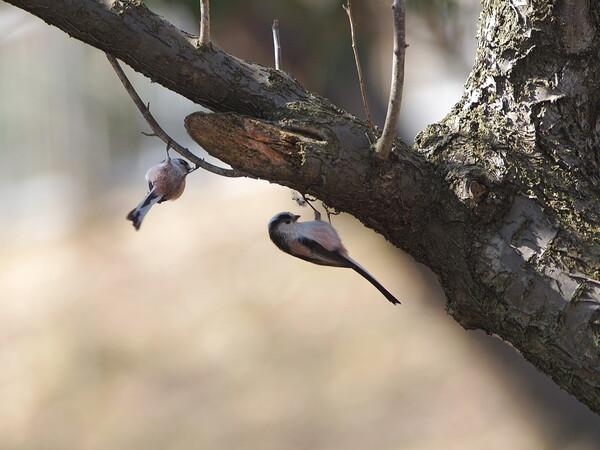 木陰の戯れ