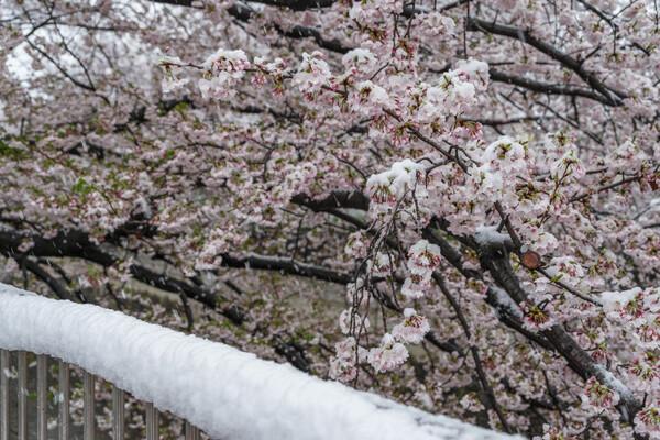 凍える花びら3