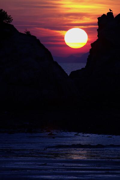 夕日と海と鳥と・・・
