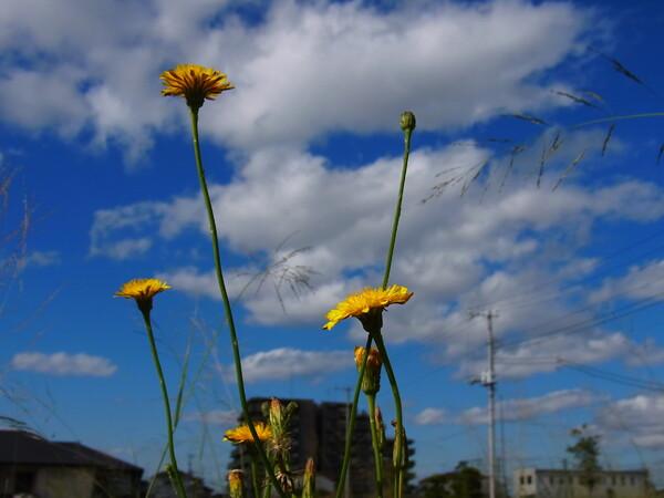野の花と晩秋の空