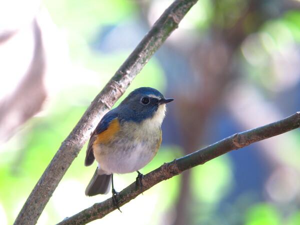 ☆幸せの青い鳥☆