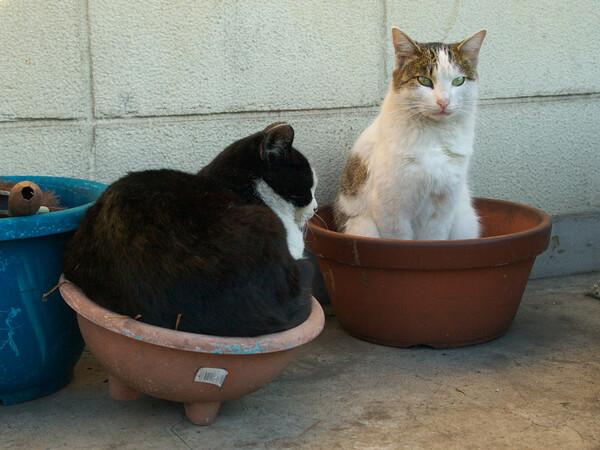 【猫】 鍋の季節?
