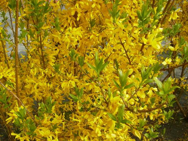 【植】黄色&緑