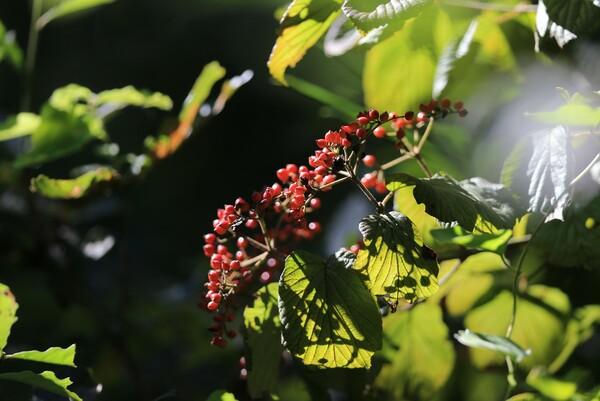 初秋の陽射し