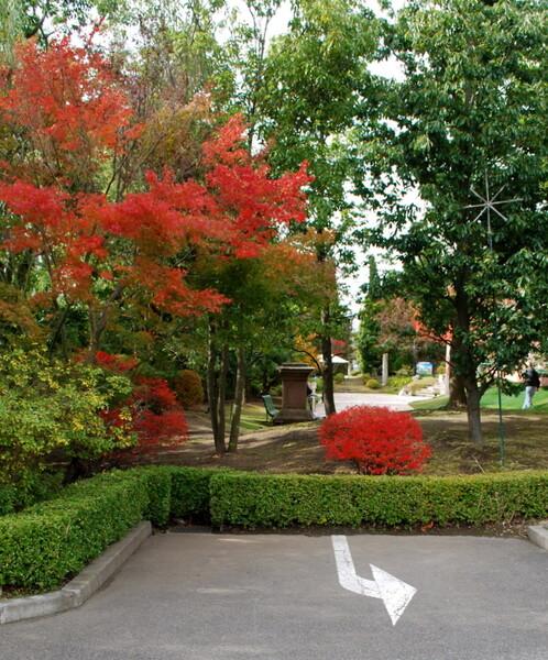 【秋】紅葉と標識
