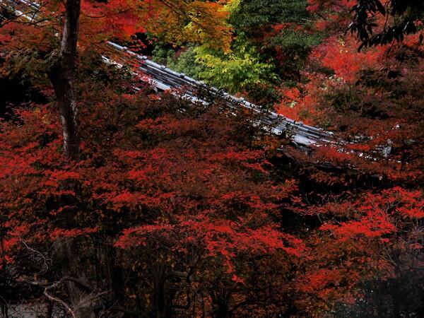 醍醐寺の紅葉3