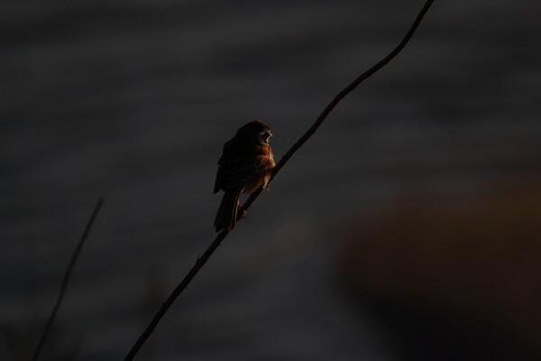 夜明けのジロー
