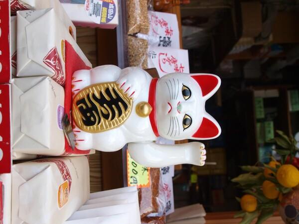 【街】頭の猫
