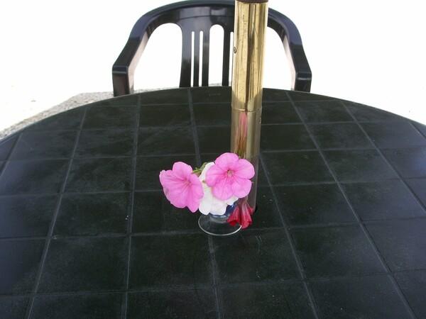 ピンクの花が・・・