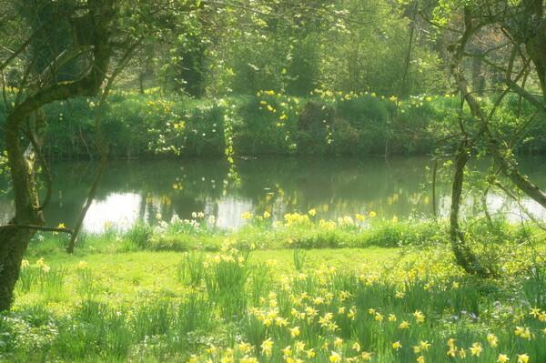 【花の情景】英国の春