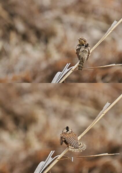 あやしい鳥