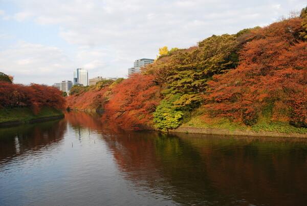 【秋】t千鳥ケ淵の紅葉
