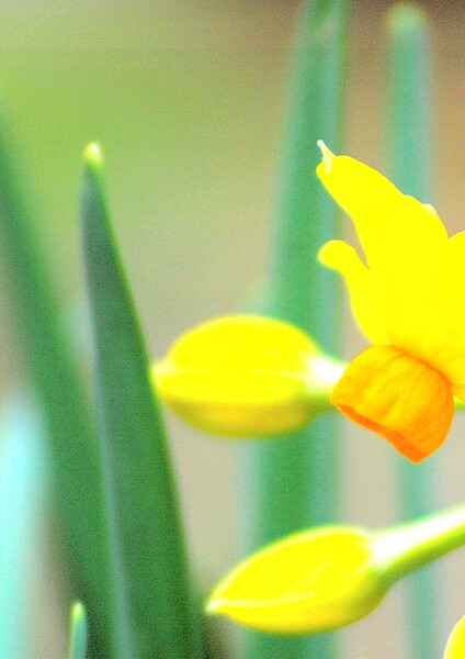 【この色 好き!】春の花#20