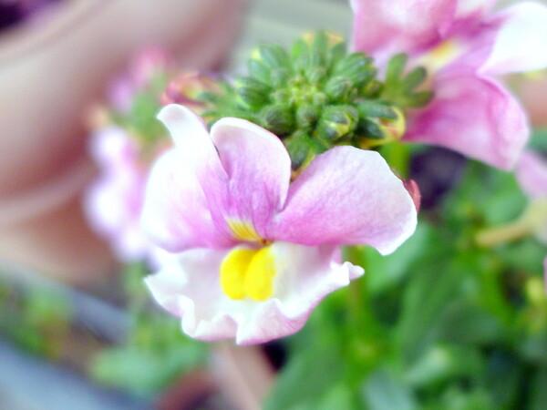 【淡彩】庭の花