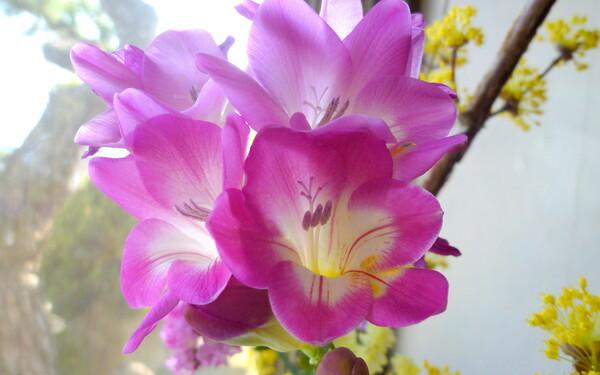 【淡彩】切り花