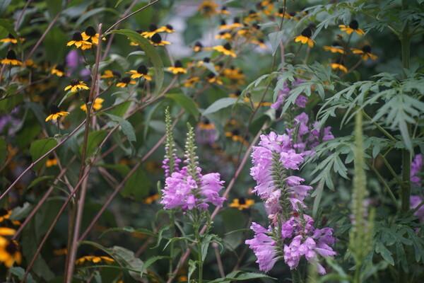 緑道、秋の花