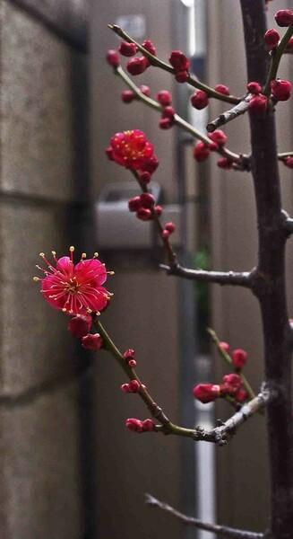 「小さな 春が」