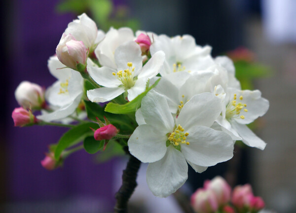 花の名不明