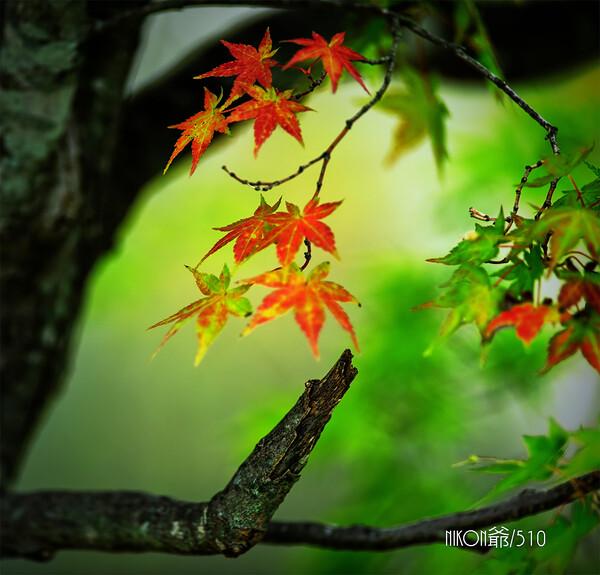 初秋の漂い