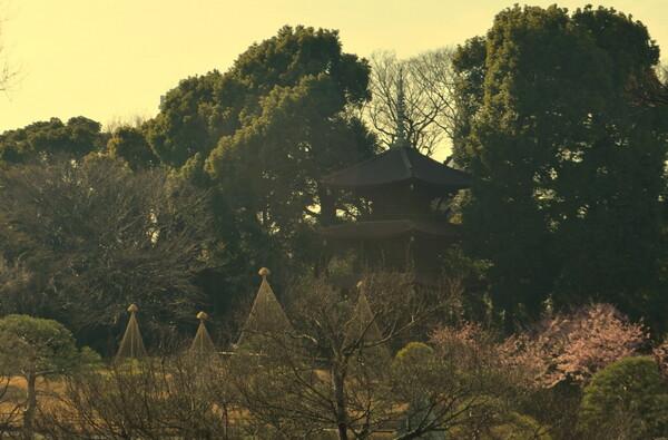 都心の庭園風景