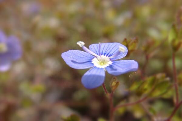 【おだやかに・・・春】花