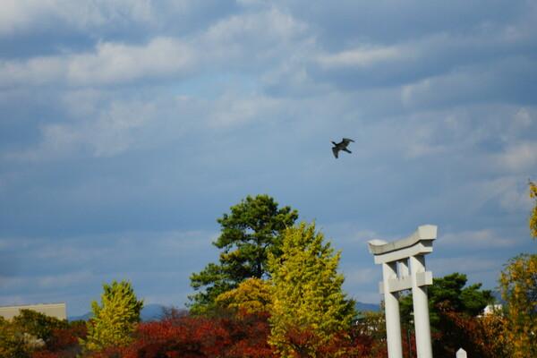 紅葉と野鳥
