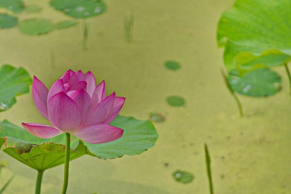 【広がり】花はす