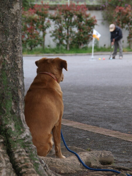 【生活の色】忠犬