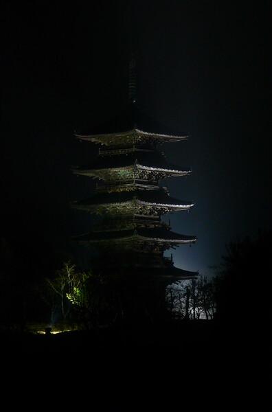 霧雨のライトアップ
