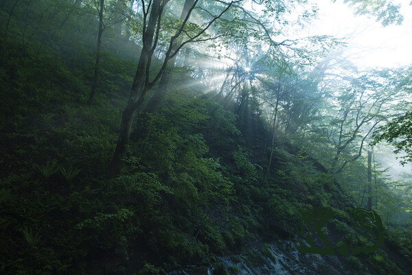 【広がり】 朝の陽射し