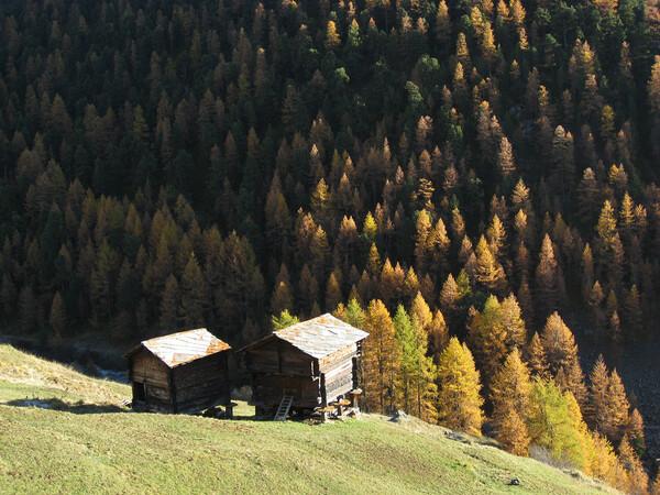 スイスの黄葉