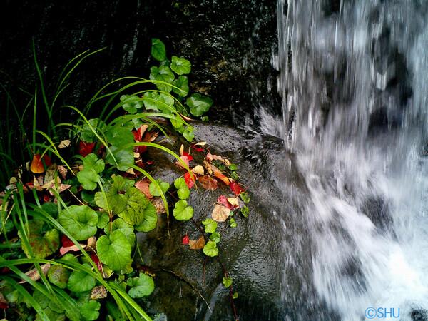 秋の流れ1