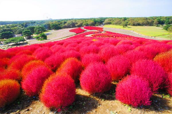 真っ赤に染まる丘