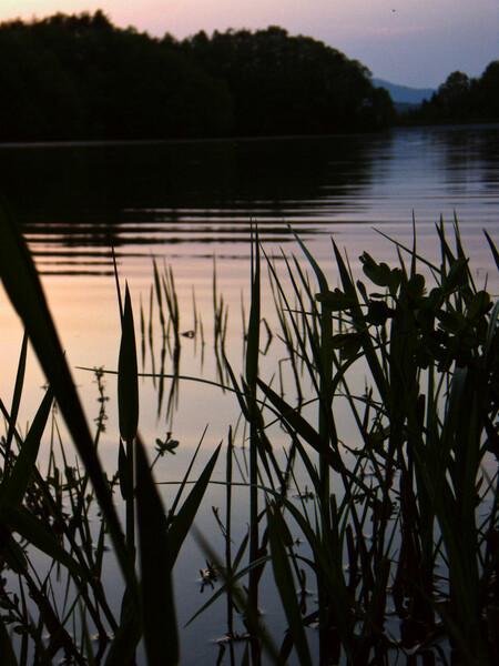 草のある水辺の夕暮れ