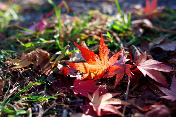 光がくれた秋・・・