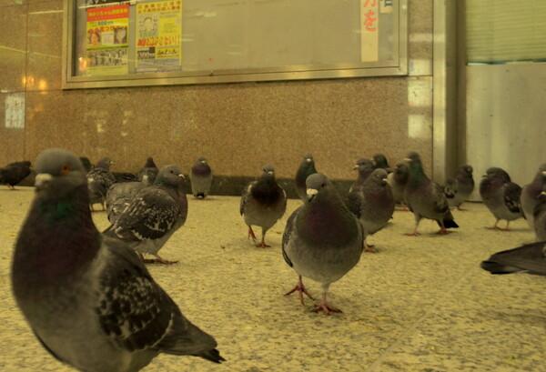 新宿駅地下の鳩
