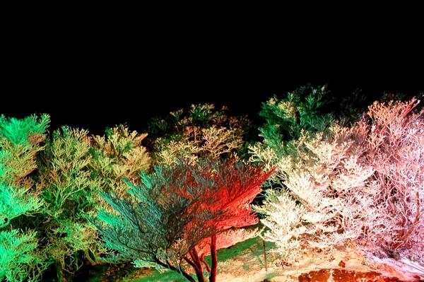 山のクリスマス前夜