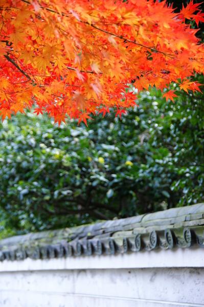 【2008】最後の紅葉!!