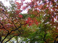 紅葉季節の風景