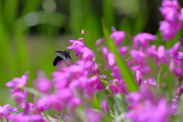 【Purple】in Black