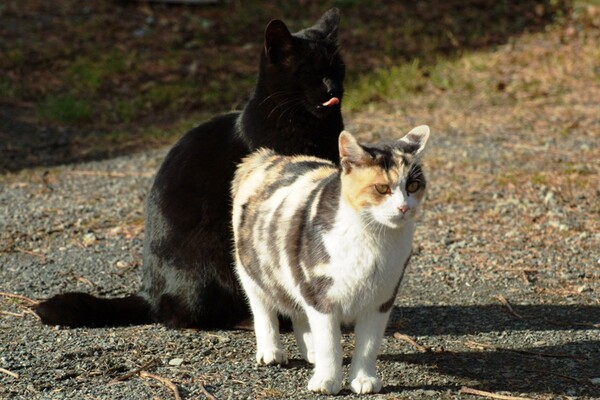 【猫】あっち向いてぇええ〜