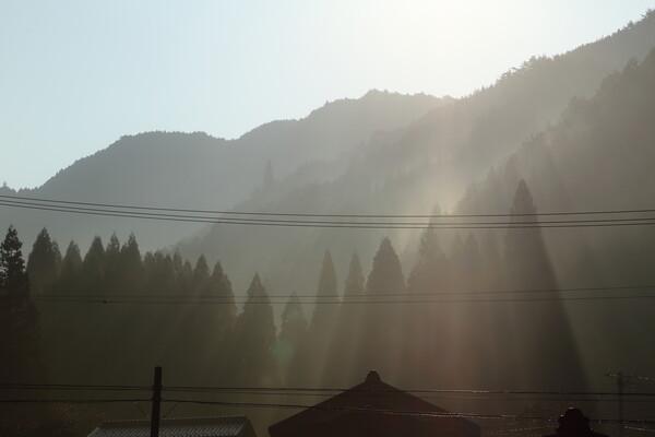 【いのち】育む光