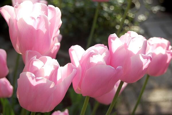 【この色 好き!】春の花#3