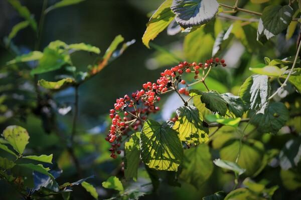 里山に秋の陽射し