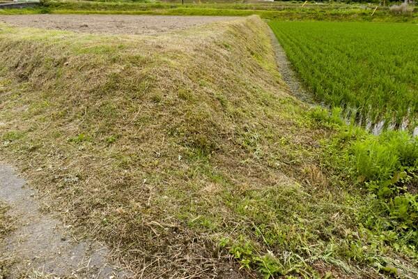 梅雨の草刈